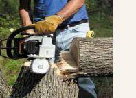 оголошення Пилим деревья Продаем Дрова